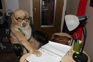 desk dog