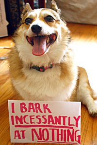dog shaming bark