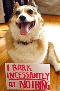dog shaming bark