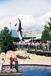 dolphin-vanaqua