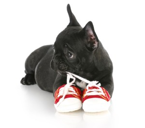 puppy in shoes